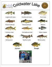 Fish species found at Isabella County Coldwater Lake Family Park