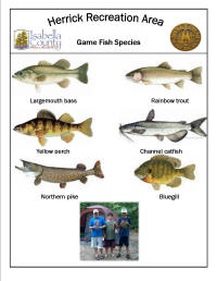 Fish species found at Isabella County Herrick Recreation Area