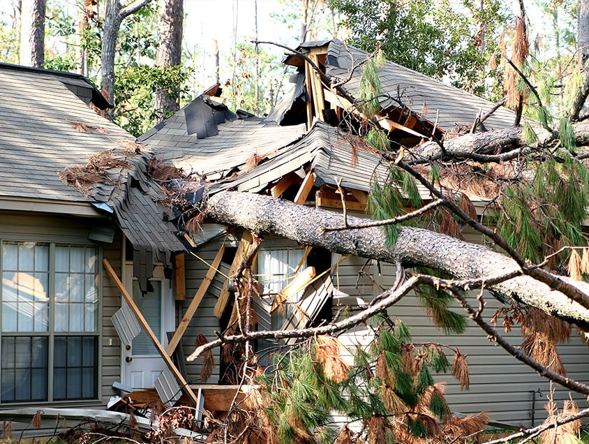 roof damaged by tree