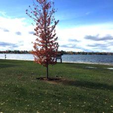 New Tree Near Beach